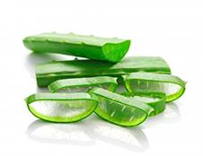 Aloe vera leafs